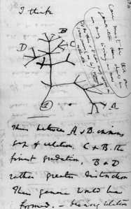 charles-darwin-tree-of-life-sketch-1837