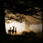 three-deer-dawn
